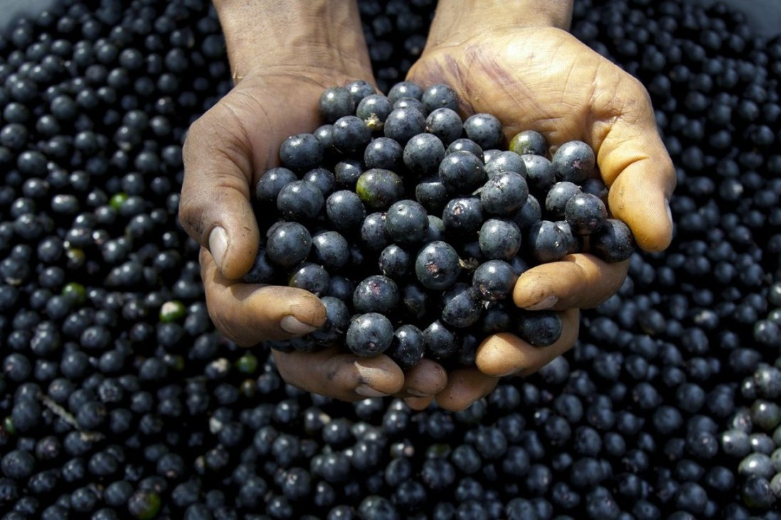 Why acai berries probably won't boost your sex drive or protect you from  cancer | South China Morning Post