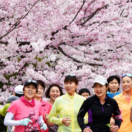 Cherry Blossom Wars China Growers Claim Symbol Of Japan As Their Own South China Morning Post